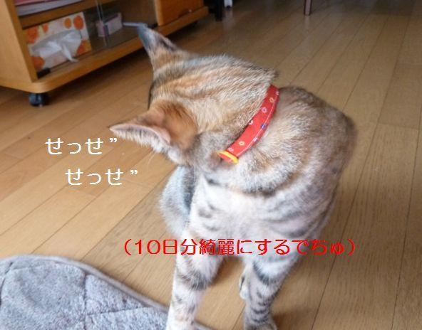 P1330871.jpg