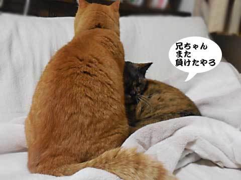 2016_12_04_2.jpg