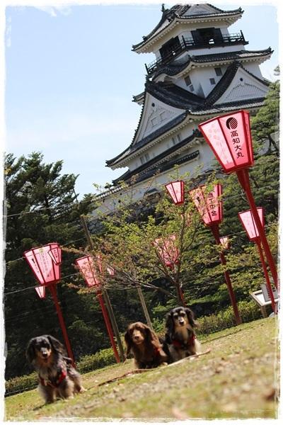 kochi3.jpg