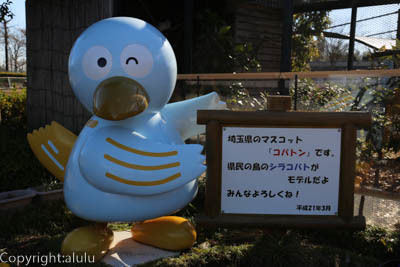 埼玉 県鳥 コバタン