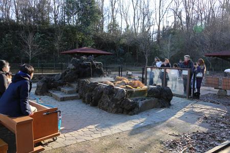 カピバラ 温泉