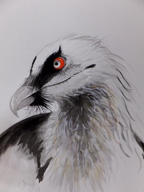 ヒゲワシ 水墨画