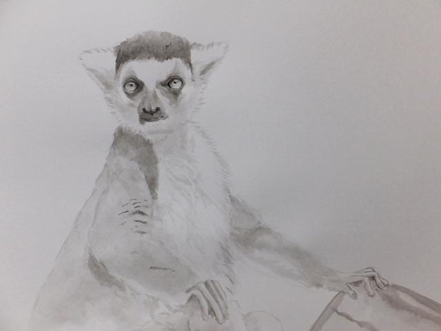 ワオキツネザル 水墨画