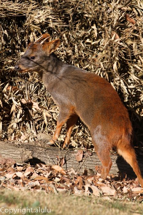 埼玉県こども自然動物公園 プーズー 画像