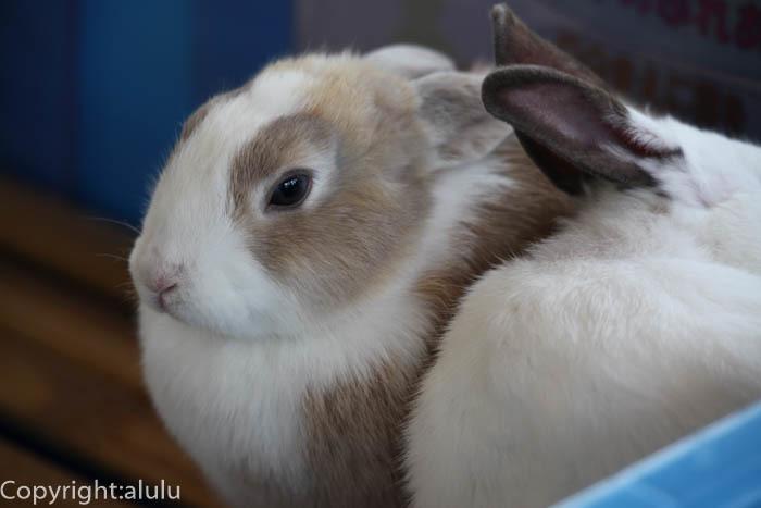 日本平動物園 訪れたい ウサギ