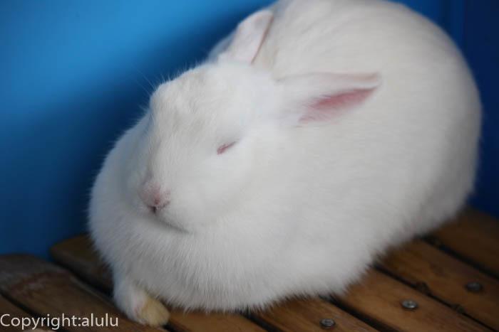 日本平動物園 ウサギ