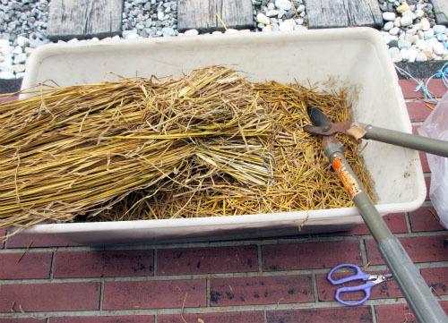 稲わらマルチング