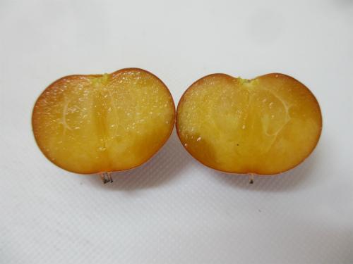 エチオピアグーズベリー