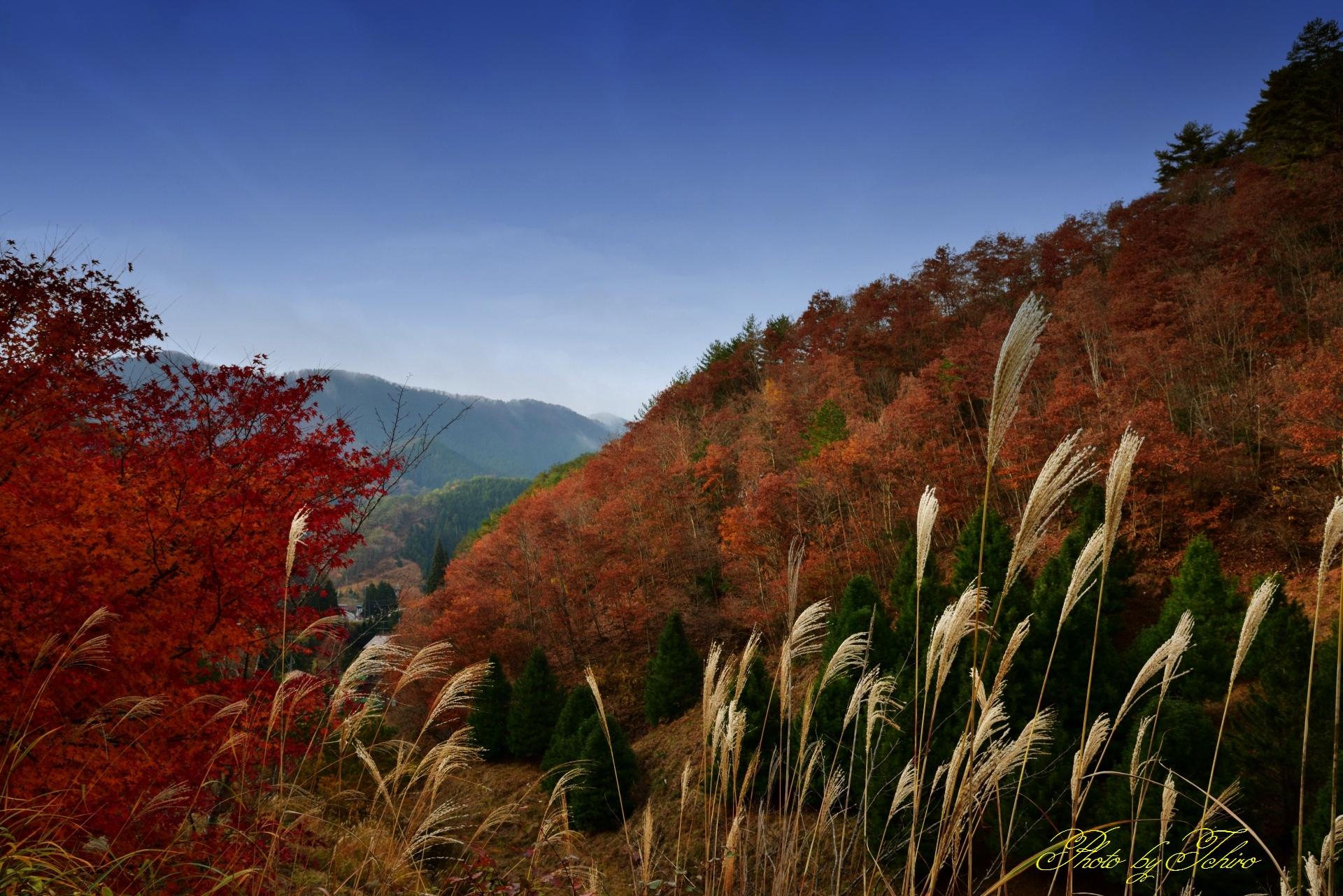 野迫川村の紅葉