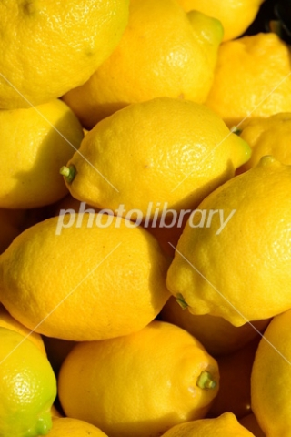 4648330 レモン