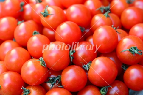 4854867 プチトマト