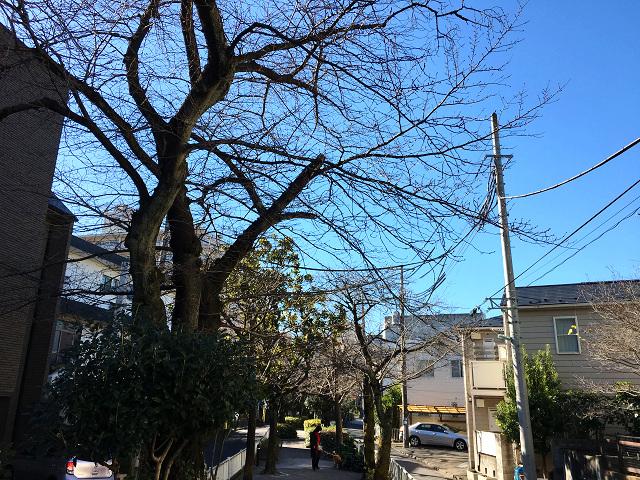 快晴の寒い東京 by占いとか魔術とか所蔵画像