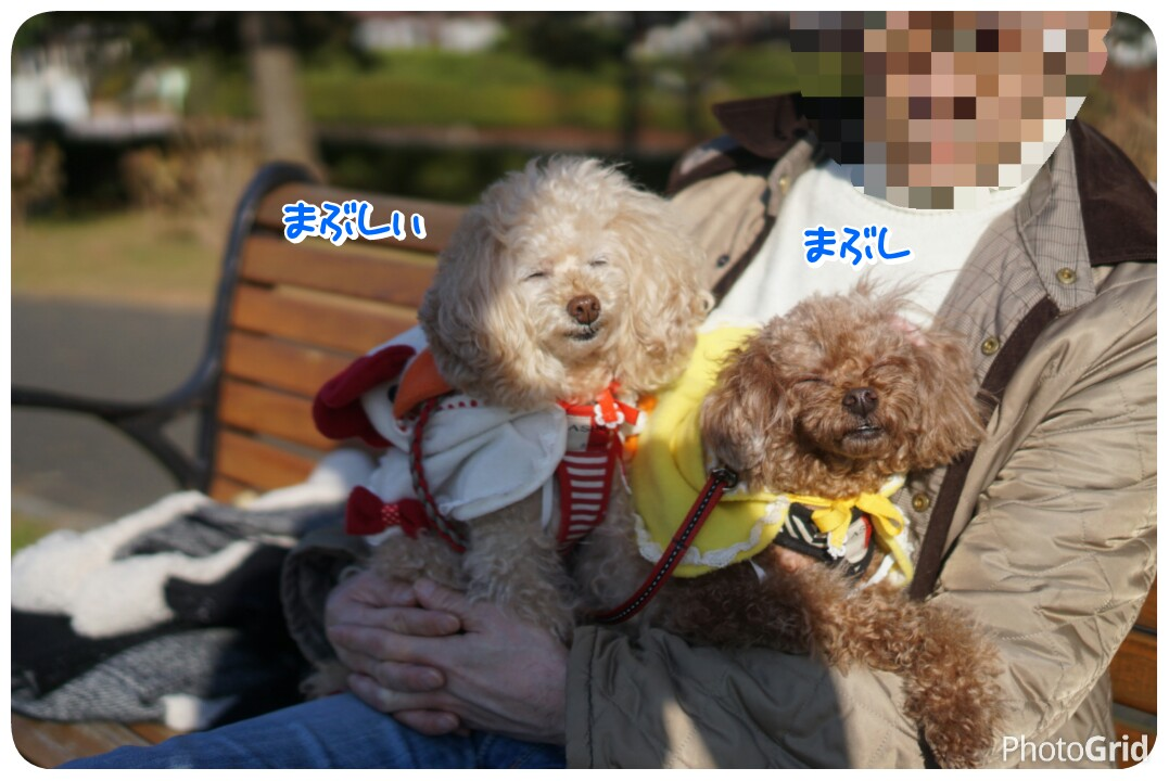 20170103222908dfc.jpg