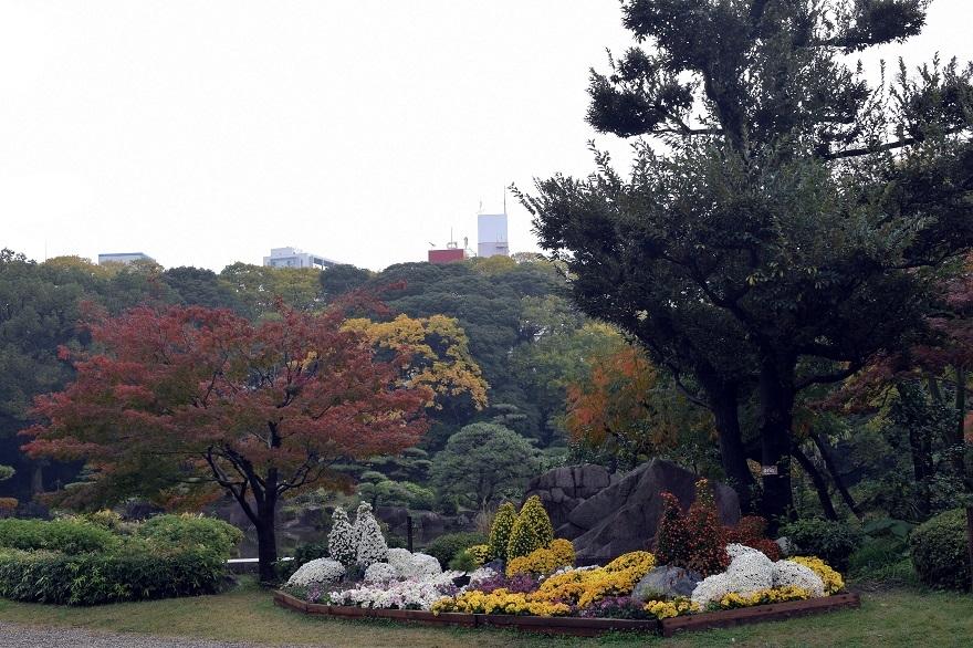 慶沢園・菊 (0)