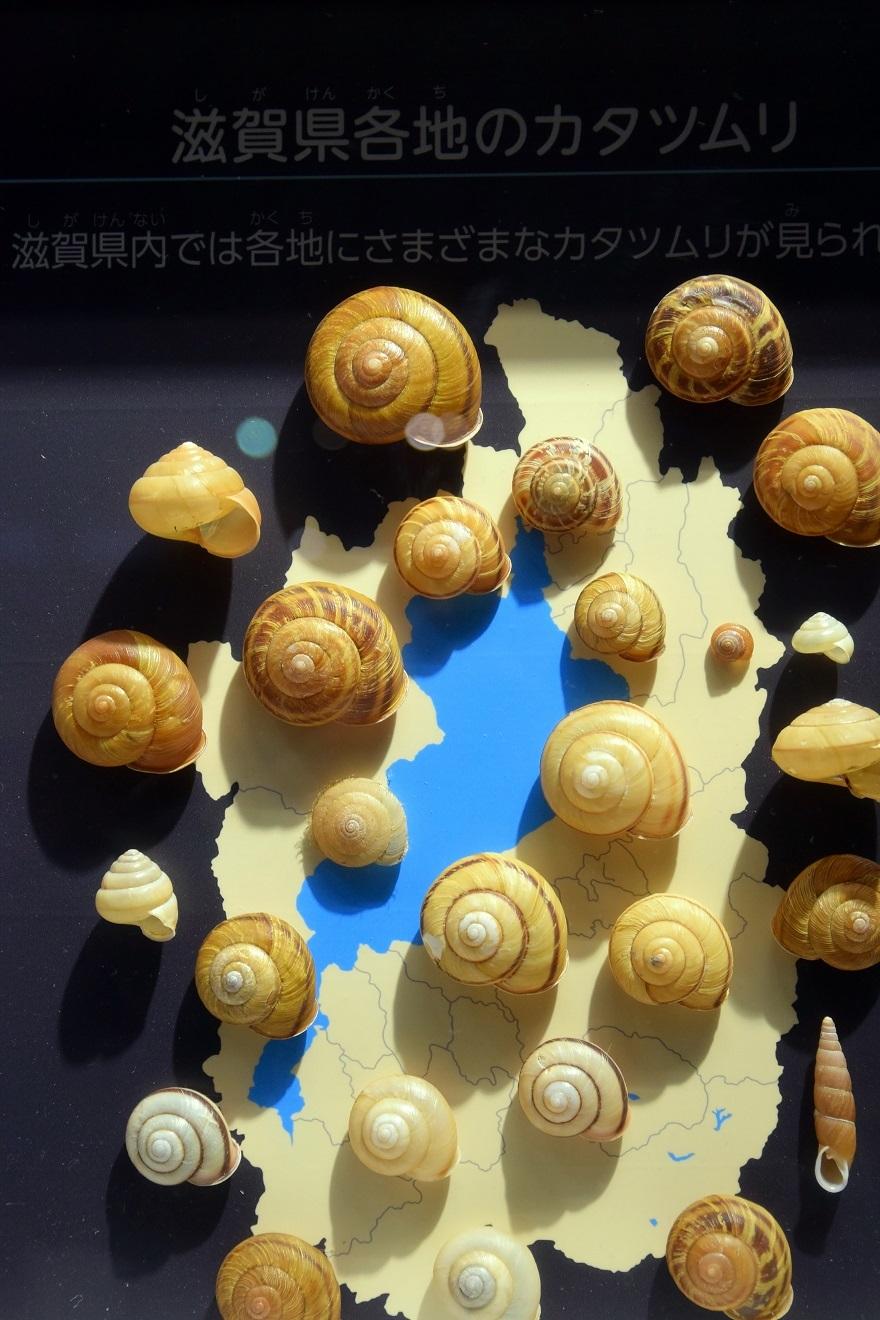 琵琶湖博物館・冬 (7)