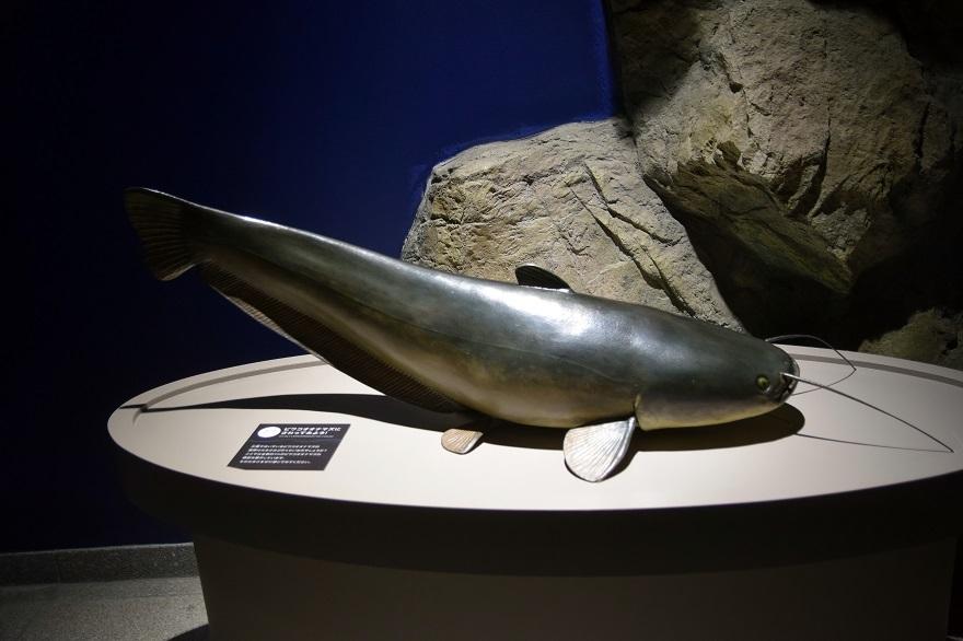 琵琶湖博物館・冬 (08)