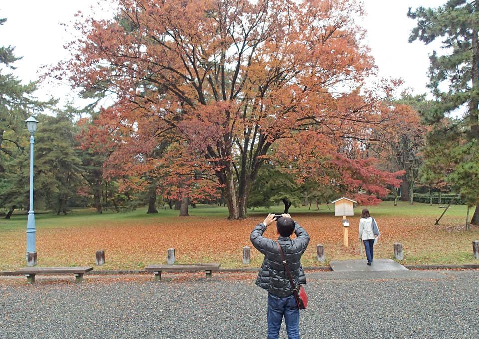 keyaki_604.jpg