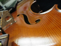 Viola H 1