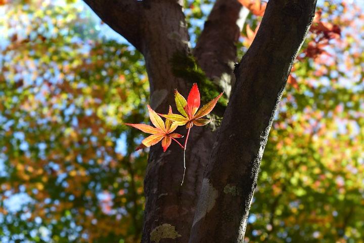 きれいな葉