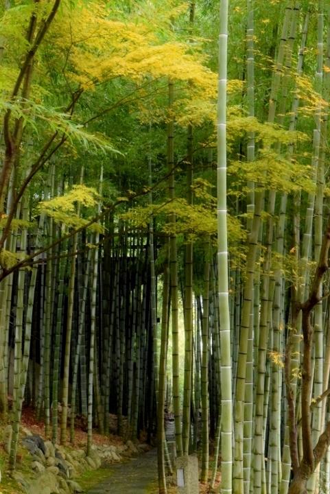竹林も暗い