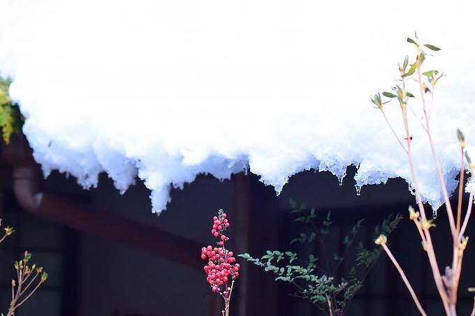 雪と赤い実