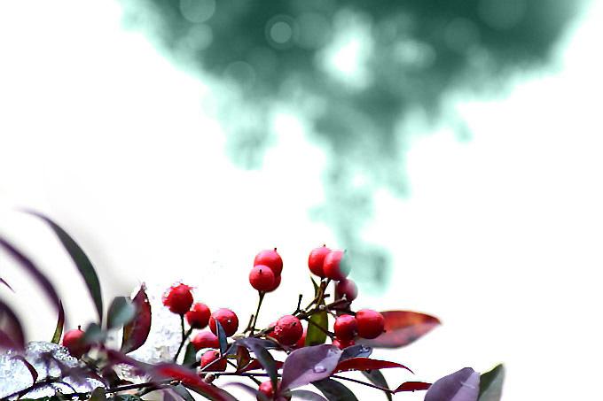 赤い実と氷