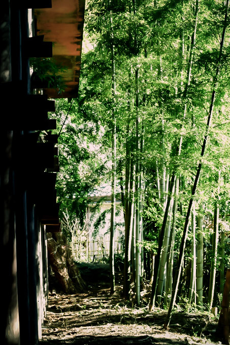 片付いた竹林