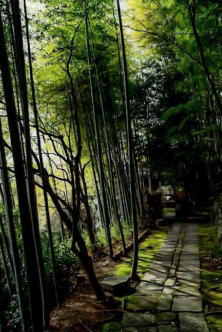 竹林と灯り