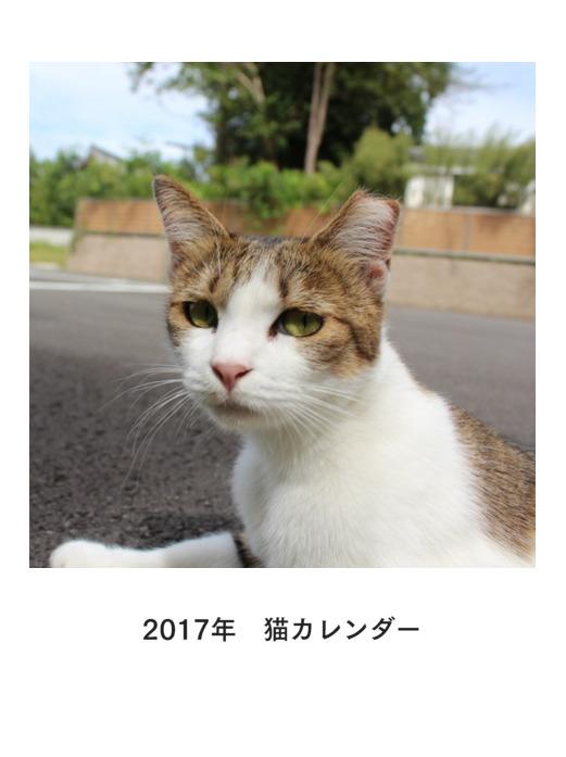 2017neko-jacket.jpg