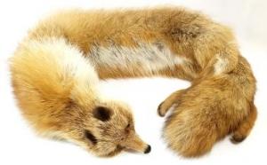 狐の襟巻き