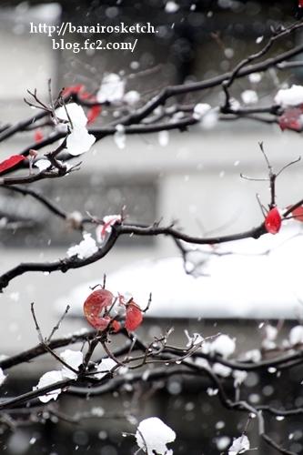 初雪201611-11