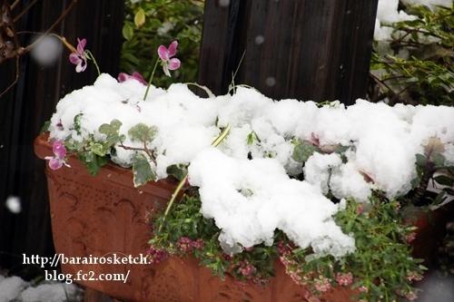 初雪201611-14