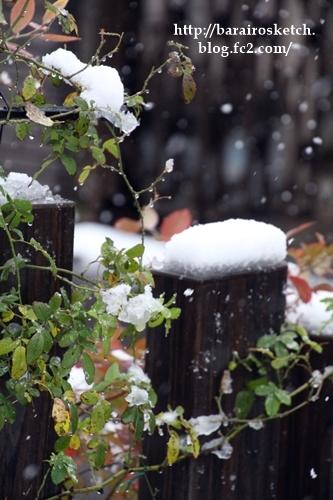 初雪201611-16