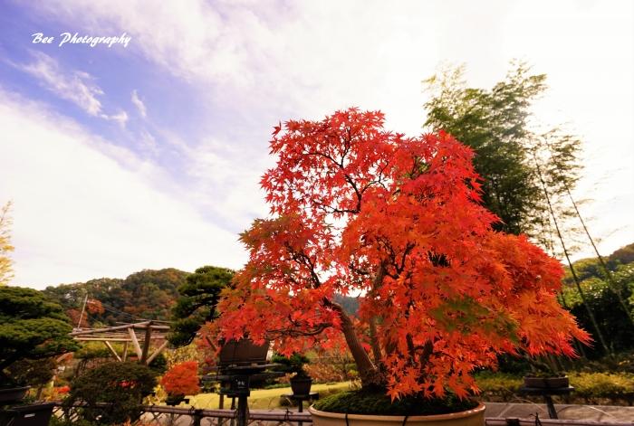 bee-高尾駒木野庭園3659