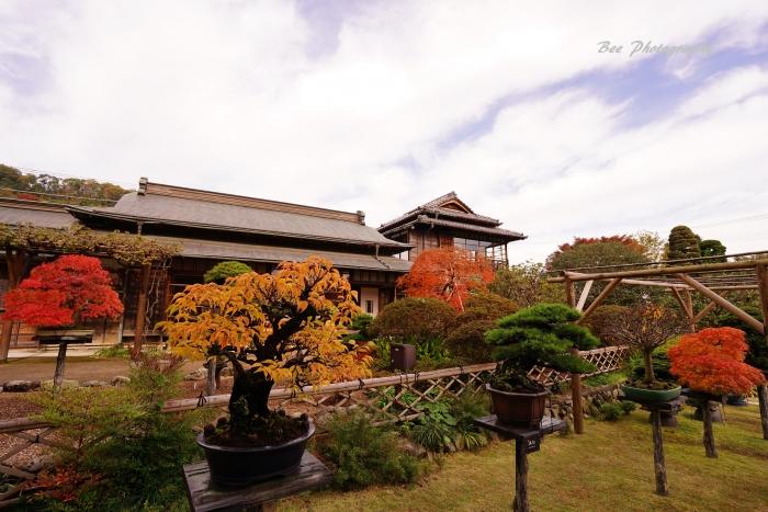 bee-高尾駒木野庭園3623