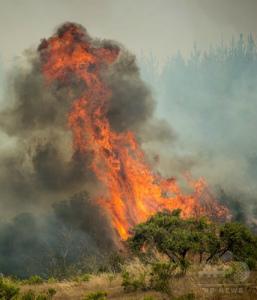 img_2fa707b63d91ab7975f83ae18e49040a175415チリで続く過去最悪規模の山火事