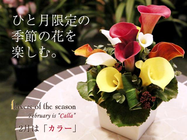 誕生日 アレンジ 花束 プロポーズ カラー