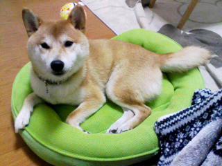 moblog_5daeee09.jpg