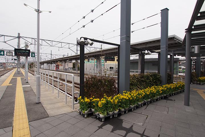 20170129_mikawa_tahara-20.jpg