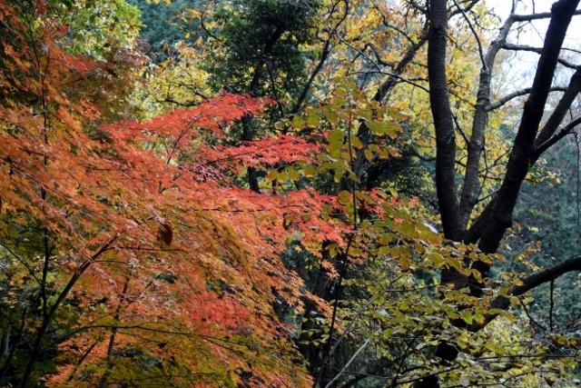 高安山の紅葉!