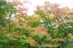 紀伊風土記の丘の紅葉風景