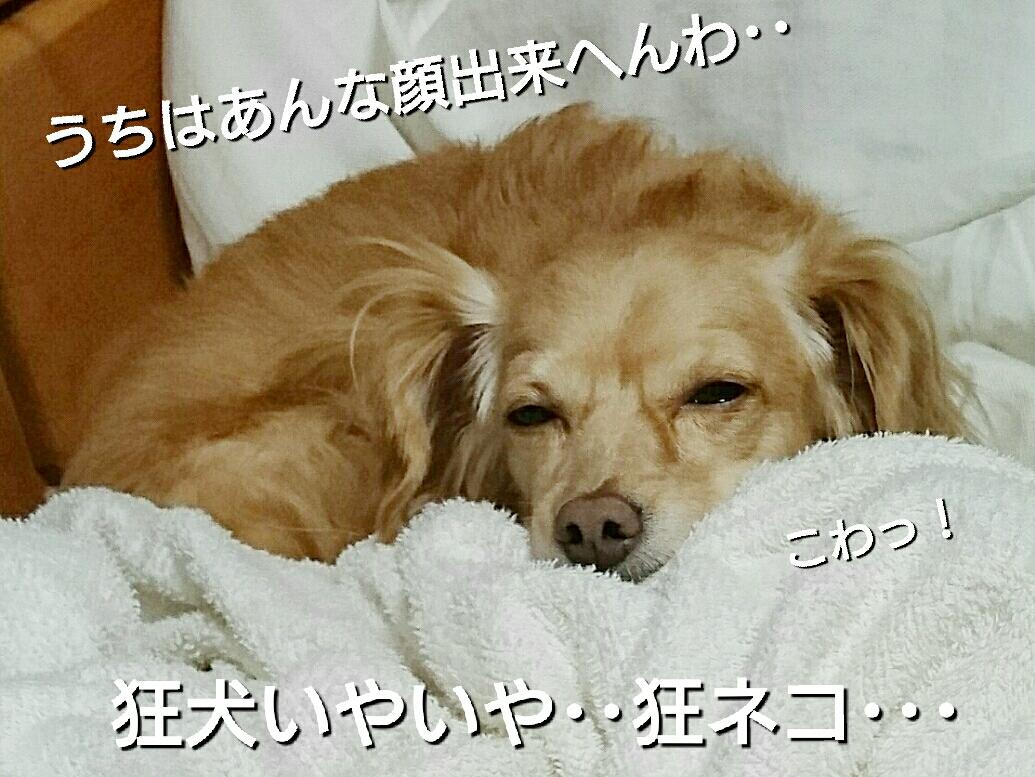 20161031133631ea8.jpg