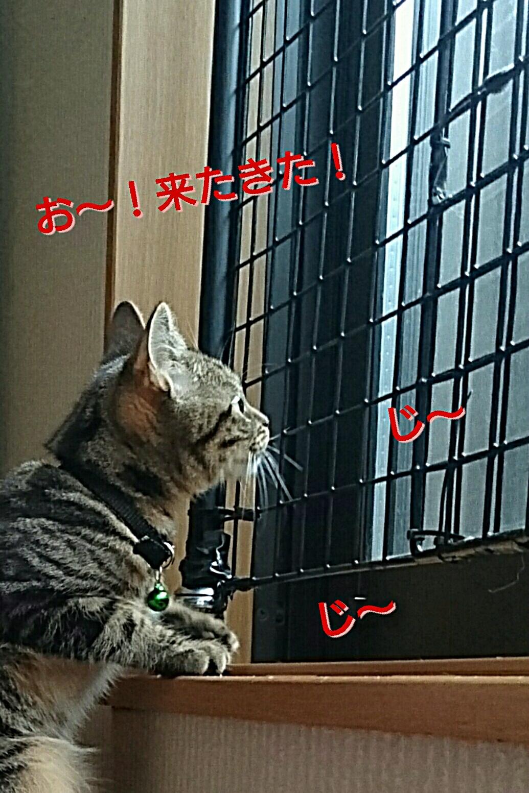 20161127160932fd7.jpg