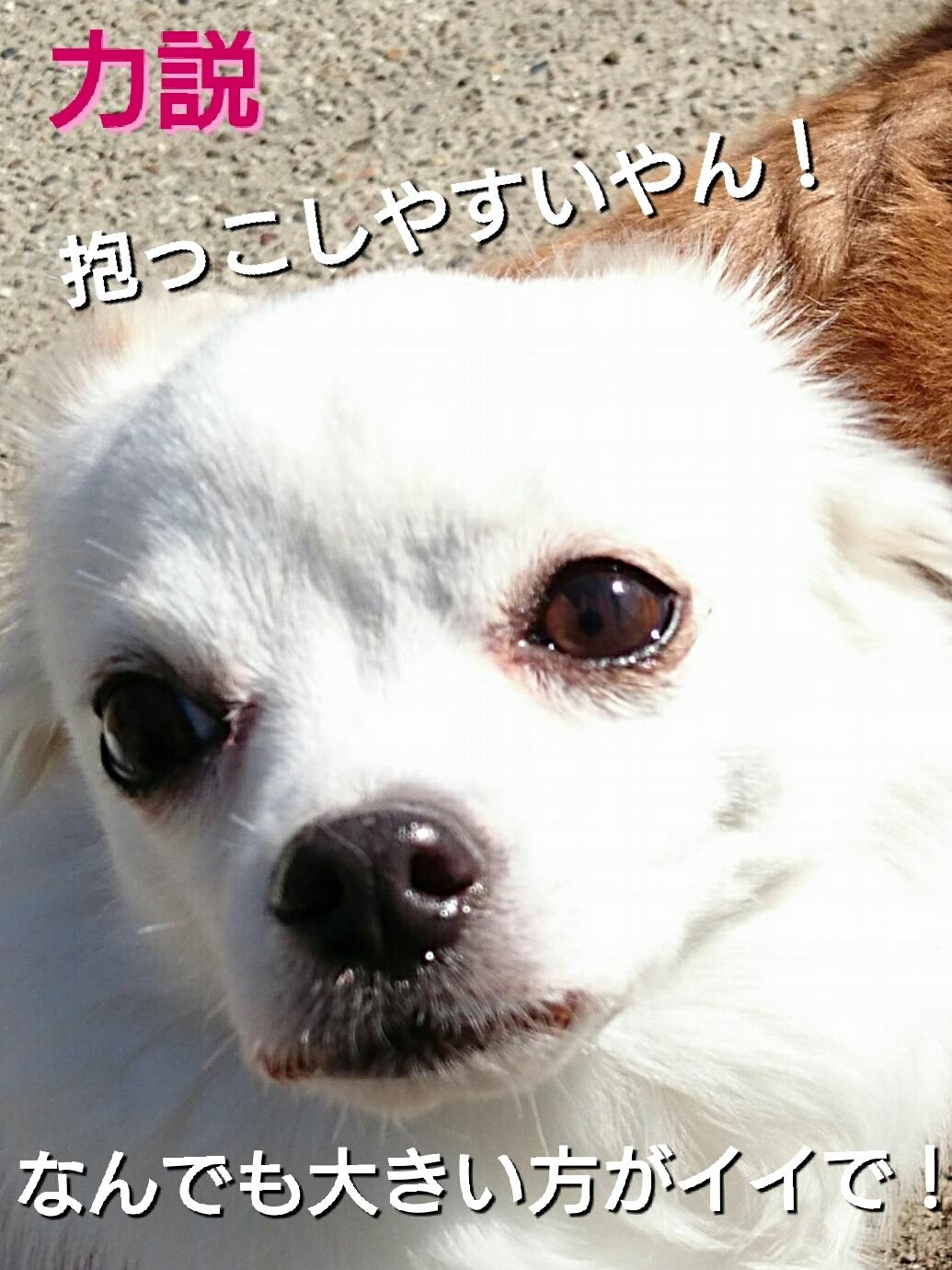 201701111149273e4.jpg