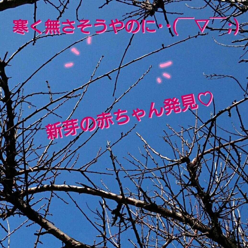 20170124041224c7d.jpg