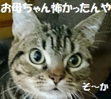 2017013015324407c.jpg