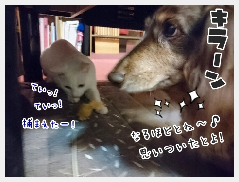 fc2_2017-01-18_07.jpg