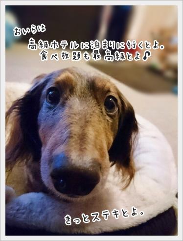 fc2_2017-02-11_03.jpg