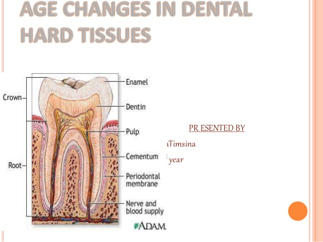 age-change-in-dental-hard-tissue-1-638.jpg