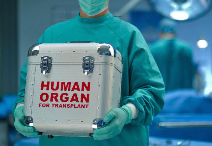 human-organ-box.jpg
